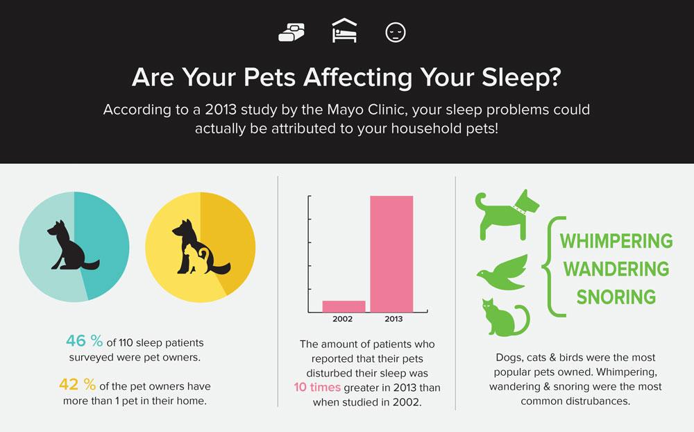 pets-sleep-infographic